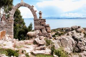 Taquile-Island-Sheep-Peru