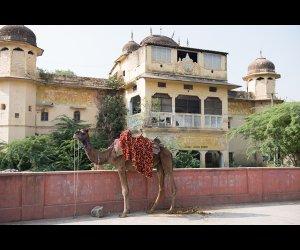 Camel Outside Building