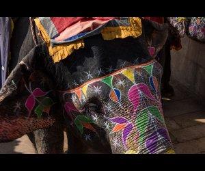 Decorated Elephant in Jaipur
