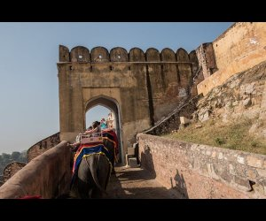 Decorated Elephants in Amber Fort