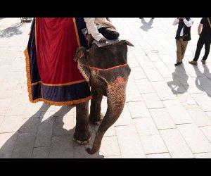 Majestic Elephant Ride