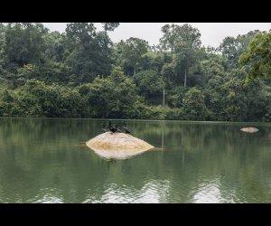 Neyyar Sanctuary Birds