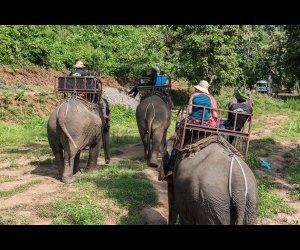 Tourists Travelling On Elephants