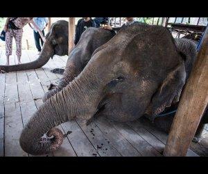 Tourists Visiting Elephants