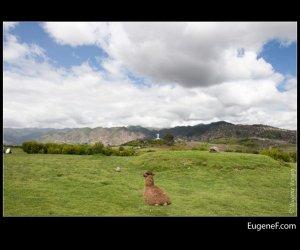alpaca 02