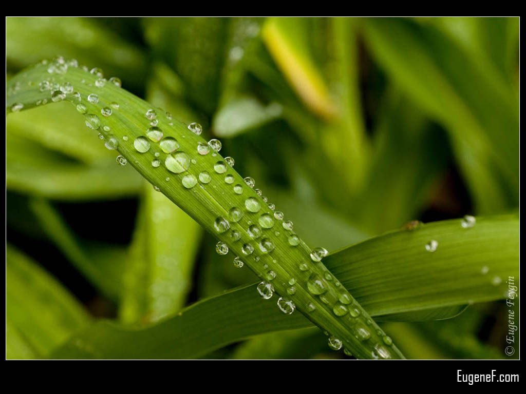 Crystal Droplets On Grass