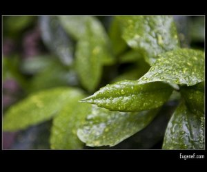 Macro Mangrove Leaves