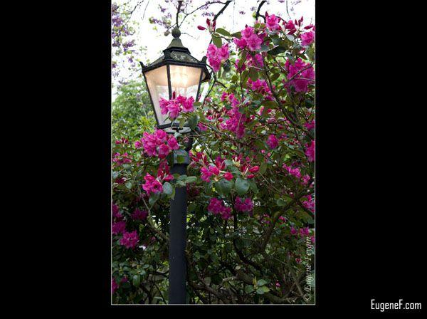 Lamp post in Freesia Flowers