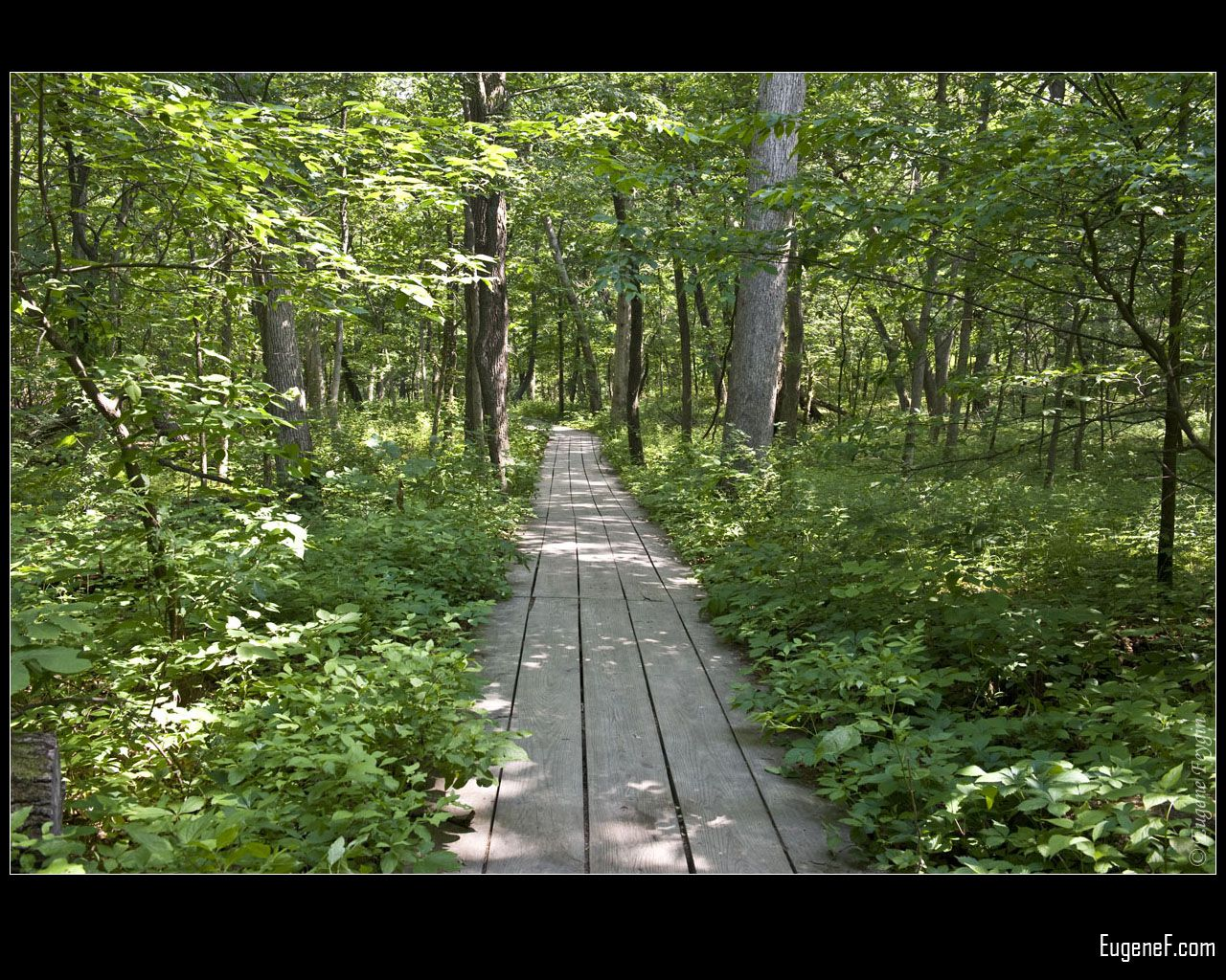 State Park Path