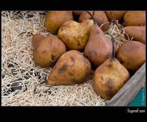 Brown Pears