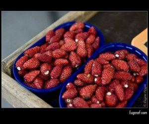 European Strawberries