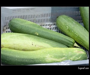 Green Zuchini