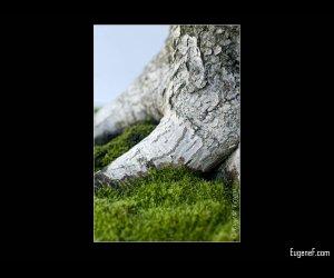 Bonsai Base Tree