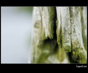 Bonsai Moss Bark