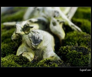 Bonsai Roots Asian