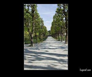 Green Tree Path