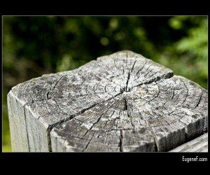 Macro Wooden Post
