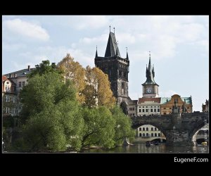 Charles Bridge Tree