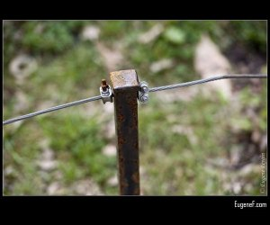 Rusted Post