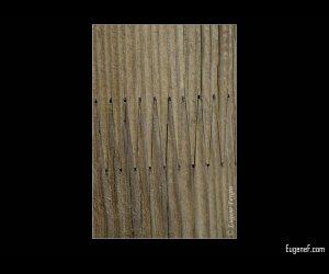 Wooden Mesh Pattern