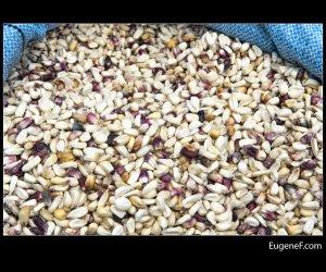 purple corn grain