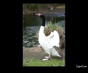 Bird Posing