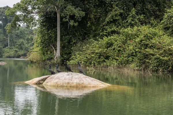 Birds in Neyyar Wildlife Sanctuary