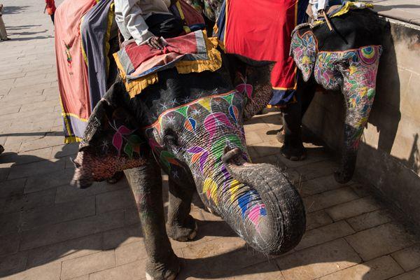 Couple of Decorated Elephants