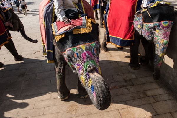 Decorated Elephants Ready For Ride
