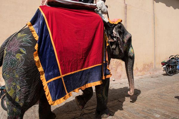 Elephant Trip to Amer Fort