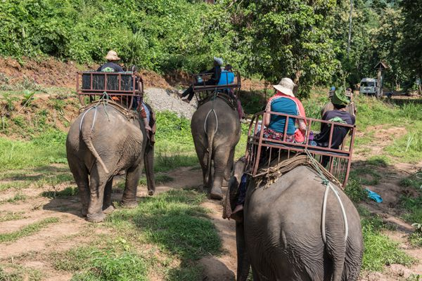 Tourists Travelling On Elephants