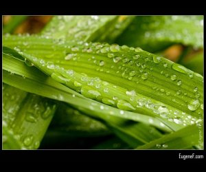 Dew On Grass