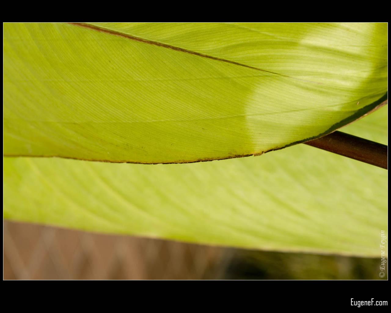 Green Bamboo Leaf