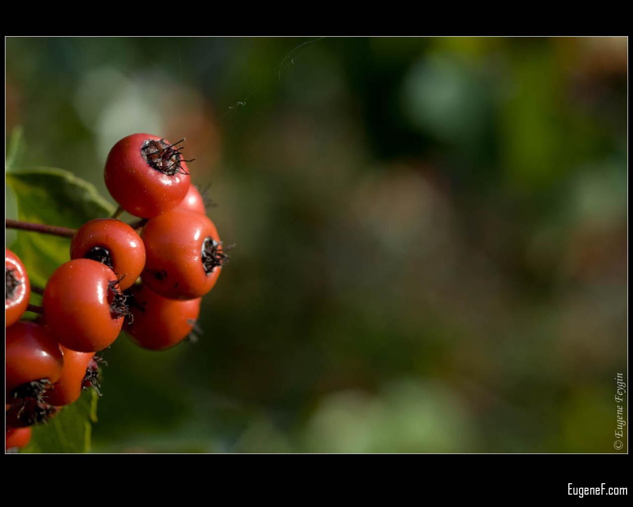 Orange Wild Berries