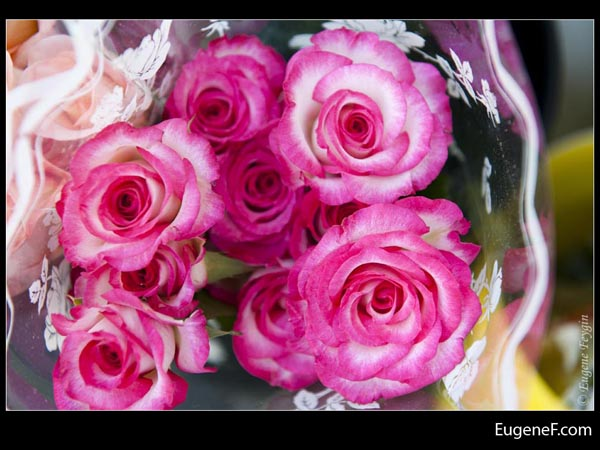 Pink White Roses