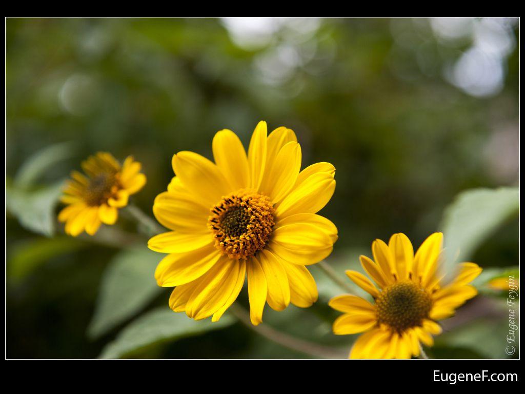 yellow flower green