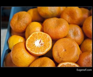 Slice Orange Bunch