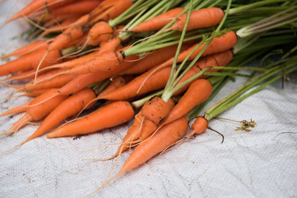 Carrots in Grocery Store