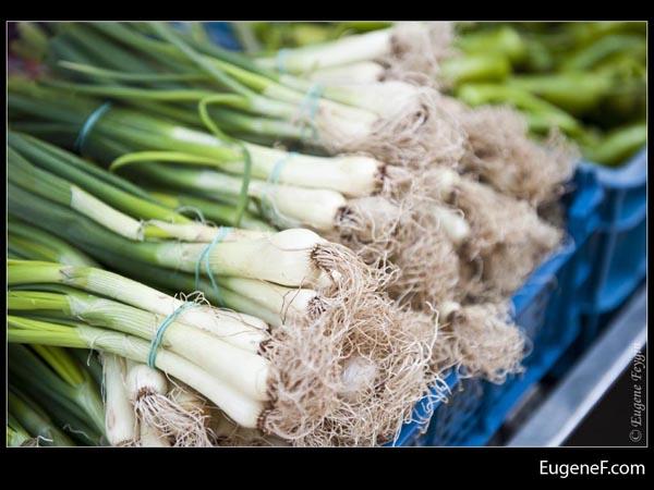Onion Tops
