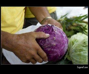 Purple Cabbage