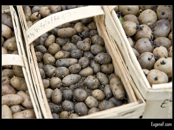 Violet Potatoes