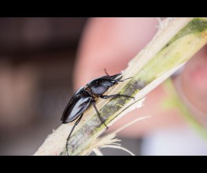 Insect on Sugarcane Stick