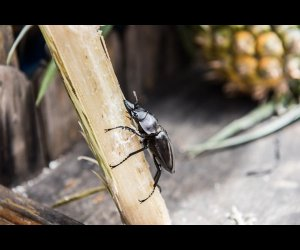 Picture Of an Insect