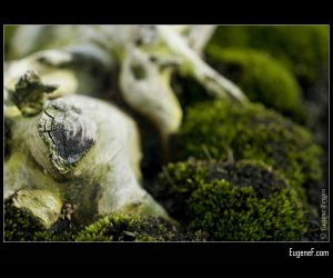 Bonsai Deep Roots