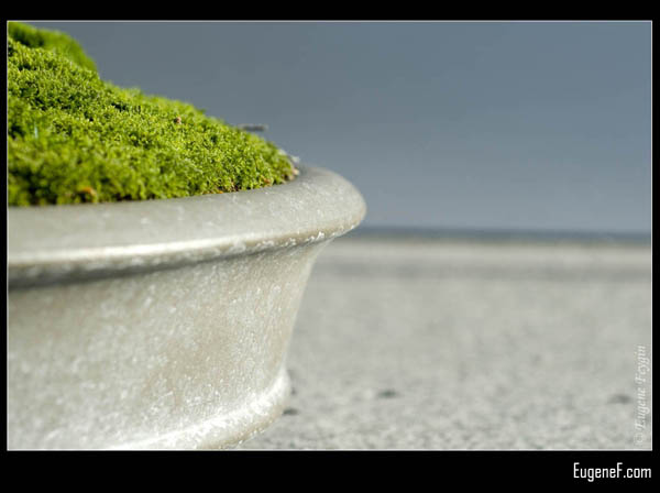 Bonsai Grass Side View