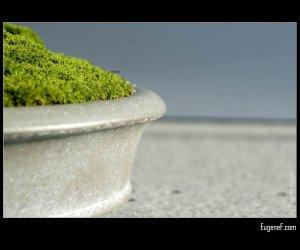 Bonsai Grass Side View