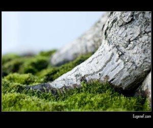 Bonsai Tree Base