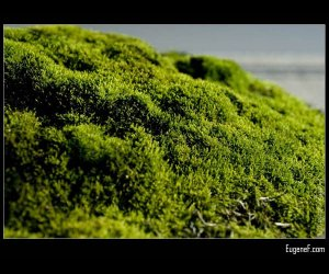 Bonzai Green Garden