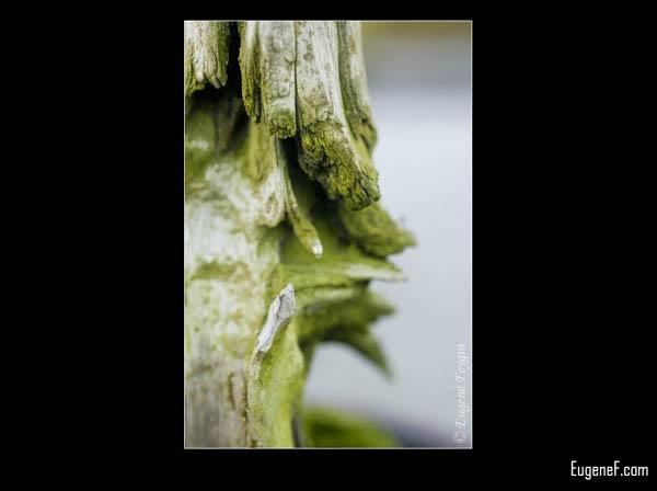 Green Bonsai Moss