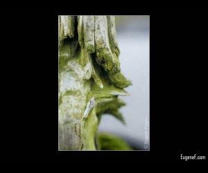 Green Moss Bonsai